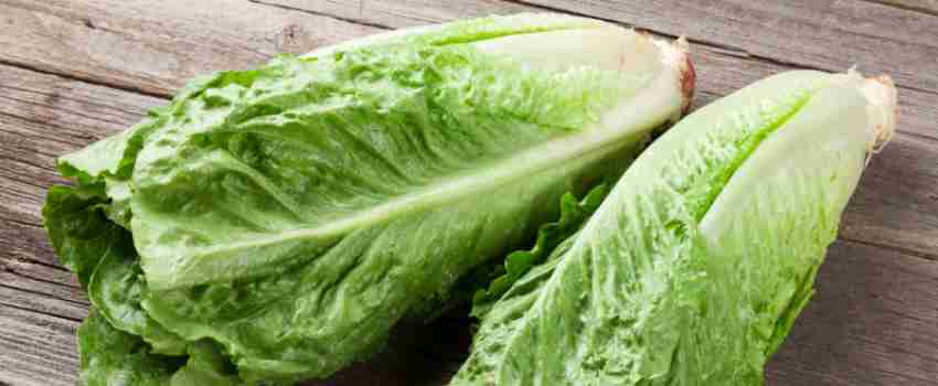 Import Licences for Romaine Lettuce Suspended Following E. coli Outbreak in the USA
